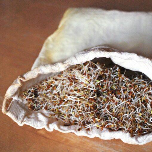 Bolsa para germinar semillas